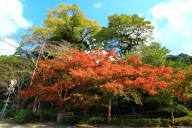 秋月城跡の紅葉写真