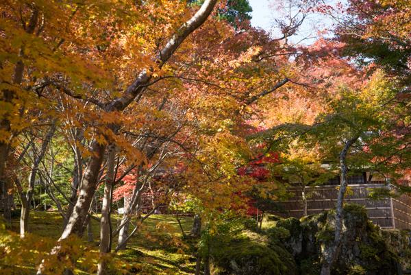 箱根の紅葉写真