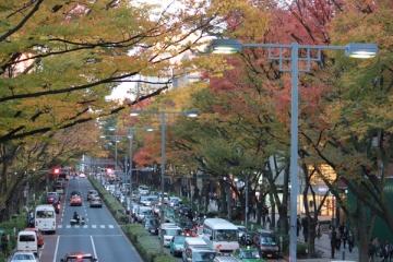 表参道の紅葉写真