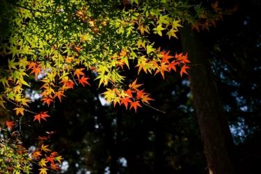 西山興隆寺の紅葉写真