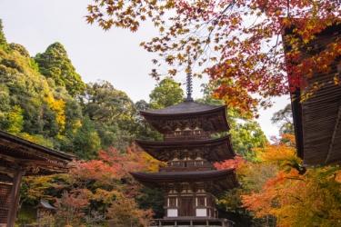 西明寺(滋賀)の紅葉写真