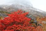 那須高原の紅葉写真