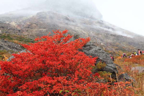 那須高原の写真