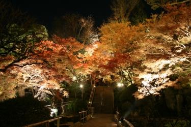 長谷寺(神奈川)の紅葉写真