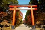 霧島神宮の紅葉写真