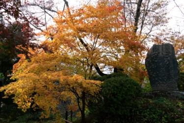 高遠城址公園の紅葉写真