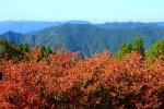 高野龍神スカイラインの紅葉写真