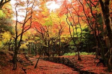 鶏足寺の紅葉写真
