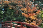 鶴岡八幡宮の紅葉写真