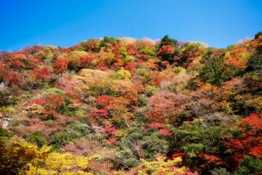 べふ峡の紅葉写真