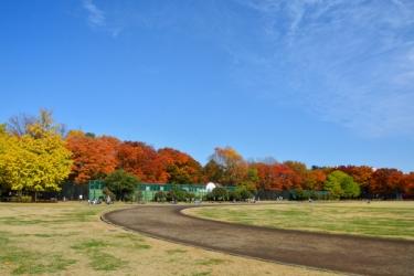 光が丘公園の紅葉写真