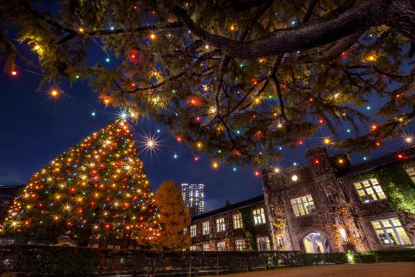 立教大学池袋キャンパスのイルミネーションの写真