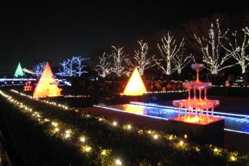 国営昭和記念公園のイルミネーションの写真