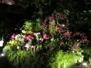 咲くやこの花館のイルミネーションの写真