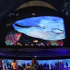 神戸市立須磨海浜水族園のイルミネーションの写真
