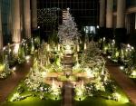 奇跡の星の植物館のイルミネーションの写真